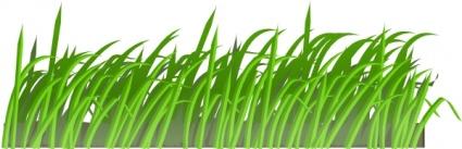 Grass clipart garden #12