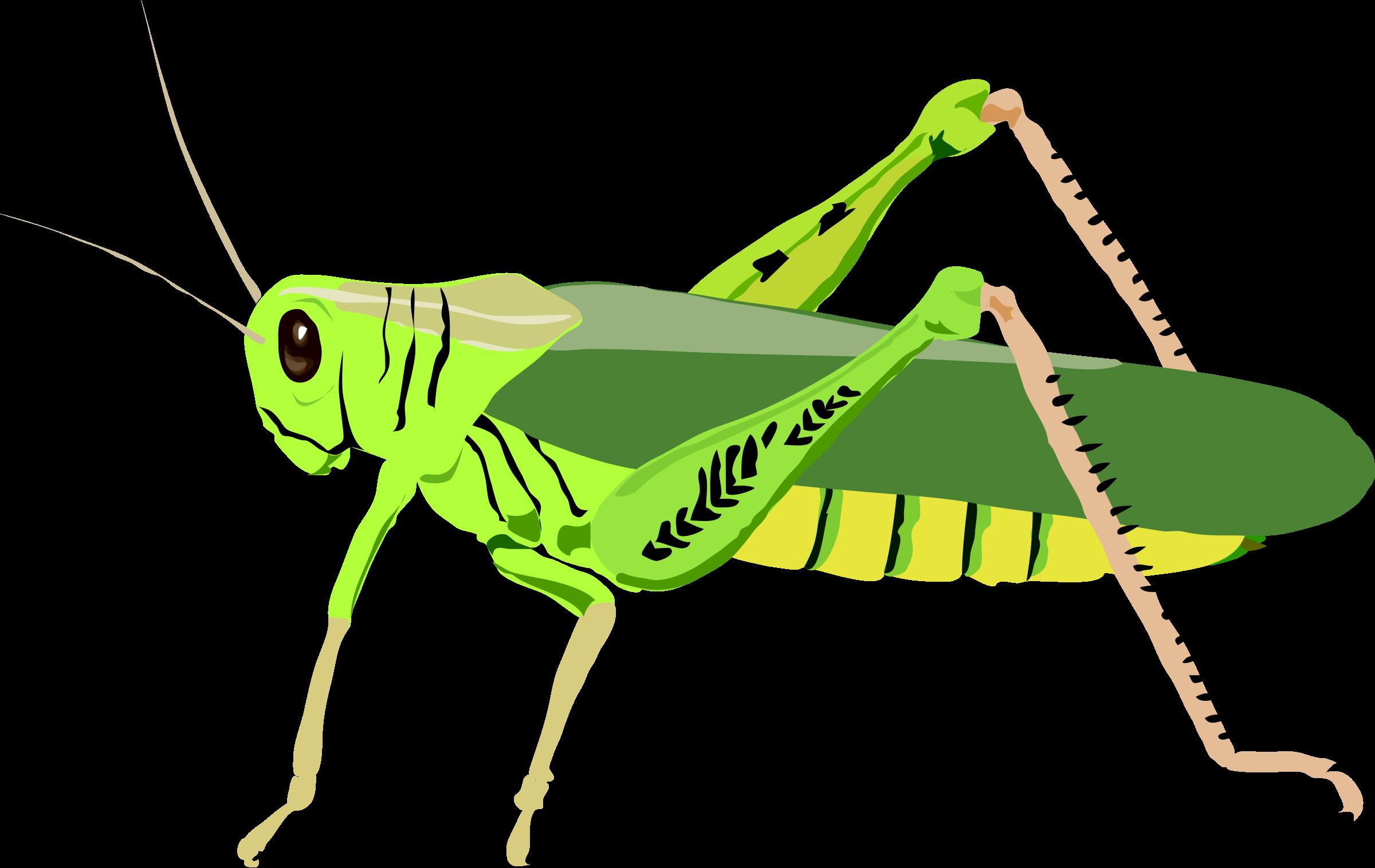 Grasshopper clipart Grasshopper Clip Images Clipart Clipart