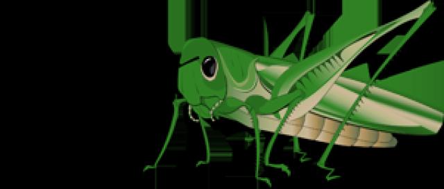 Grasshopper clipart Grasshopper clipart 3 WikiClipArt clipart