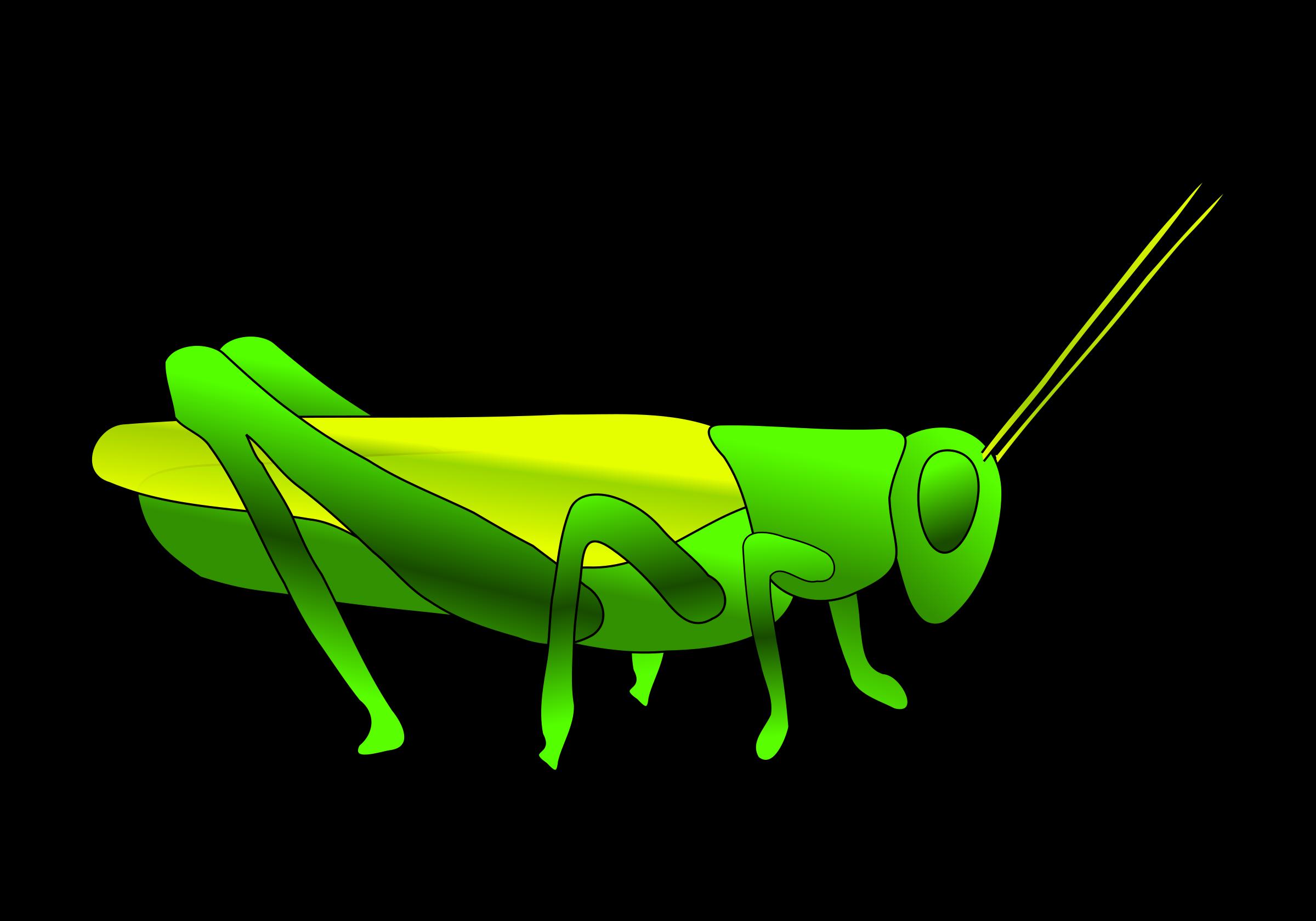 Grasshopper clipart Grasshopper Clipart Clipart #9851 Grasshopper