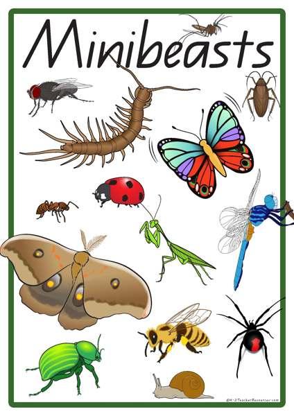 Beatle clipart minibeast Minibeast 28 Minibeasts Vocabulary Vocabulary