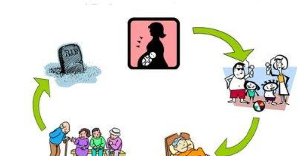 Grave clipart cradle to Google  grave Search to