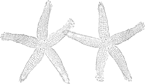 Grey clipart starfish Clker  Starfish Art Grey