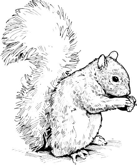 Nut clipart grey squirrel Clipart Panda squirrel%20clipart%20 Squirrel Images