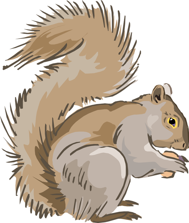 Gray Squirrel clipart  Squirrel Free Clipart