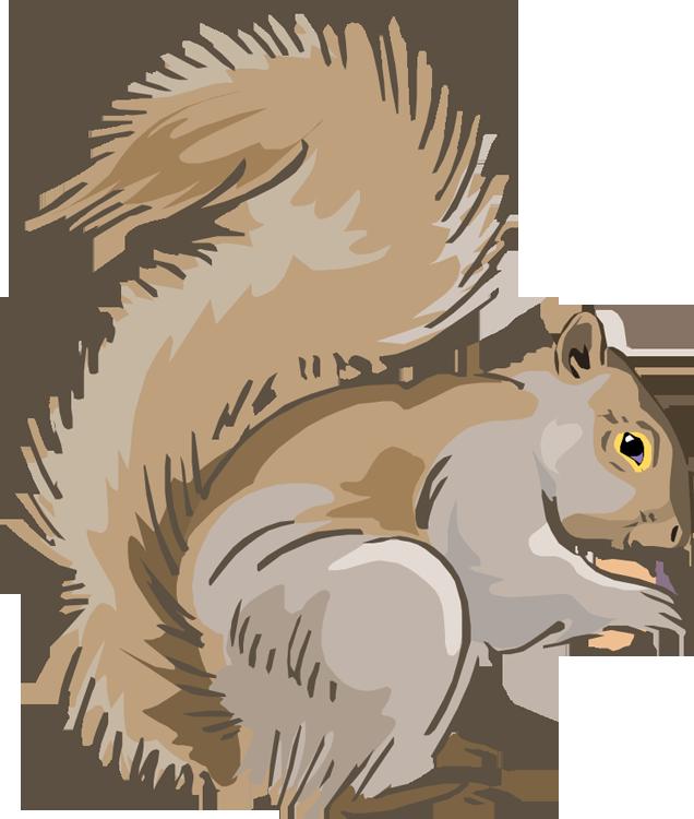 Gray Squirrel clipart  Squirrel Free Clipart