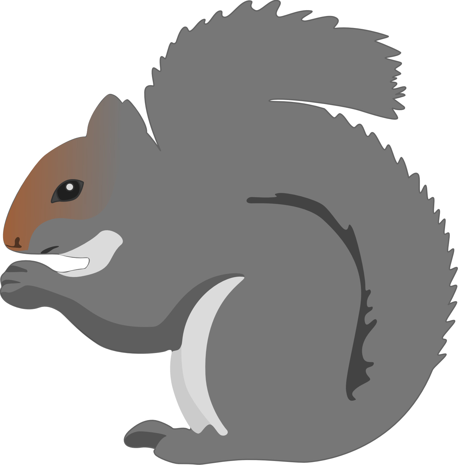 Gray Squirrel clipart Squirrel global 'Grey Suggestions understand