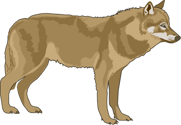 Wolf clipart wolf pup Photo#21 wolf howling Clipart clipart