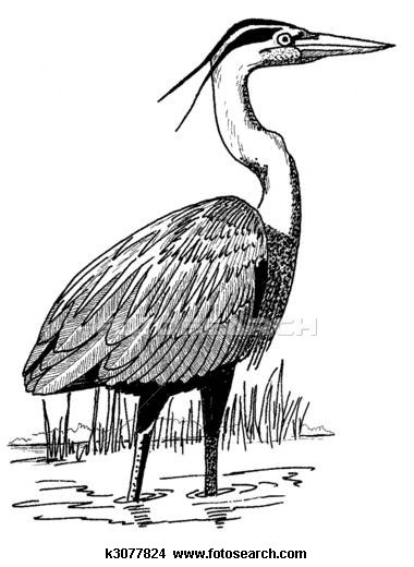 Great Blue Heron clipart On Blue about Pinterest Animals