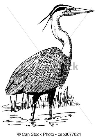 Great Blue Heron clipart drawing #15