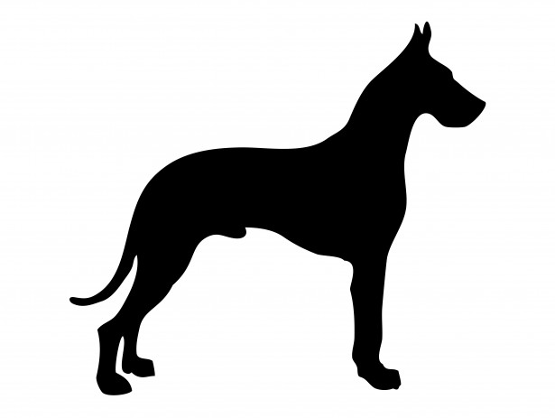 Great Dane clipart Dog Free Dane Pictures Photo
