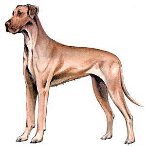 Great Dane clipart Dane Clipart Dane and Clipart