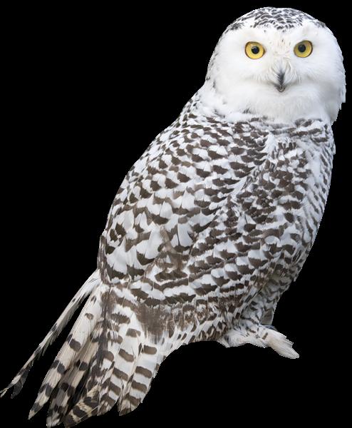 Great Gray Owl clipart Bird Stepp Pinterest owl by