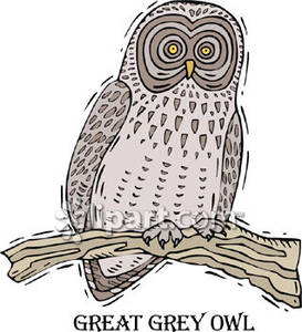 Great Gray Owl clipart Grey Free Royalty Great Owl