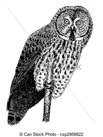 Great Gray Owl clipart Horned Illustration Bubo Great Owl