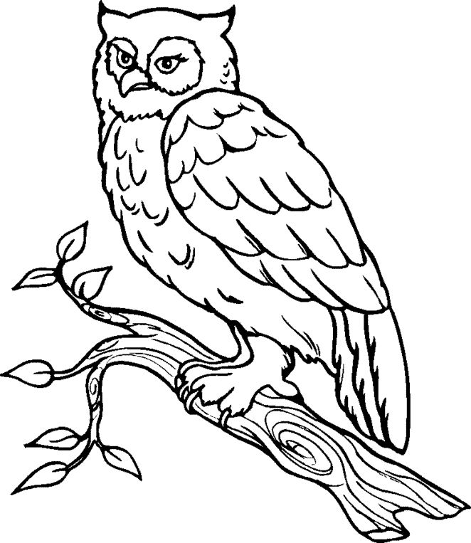 Great Grey Owl clipart Download Gray Download Great Owl