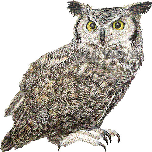 Great Horned Owl clipart Art Great clip picture /