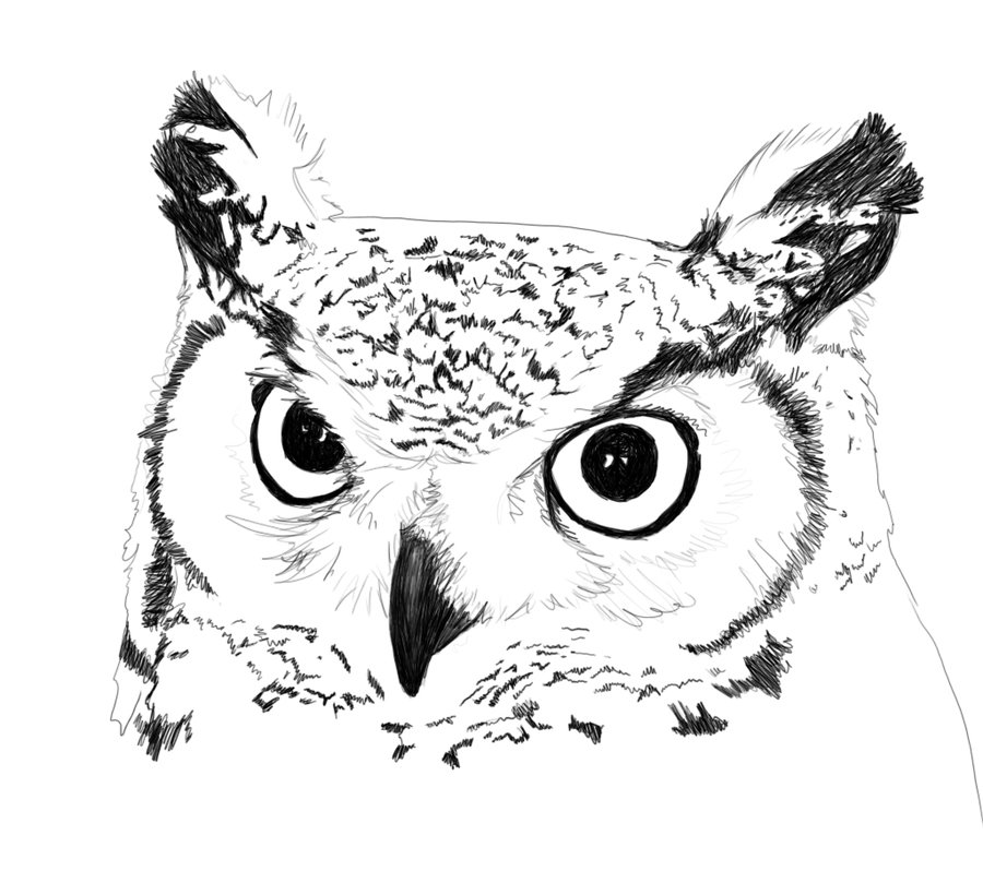 Barred Owl clipart black and white Great photo#9 owl Great horned
