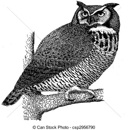 Horned Owl clipart Drawing Owl of virginianus Bubo