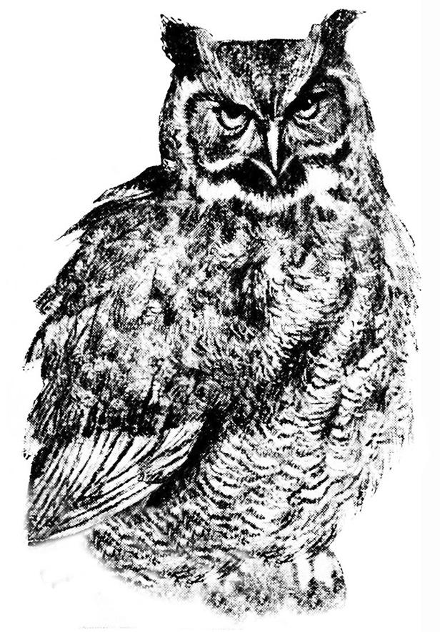 Great Horned Owl clipart Vintage great horned art tree