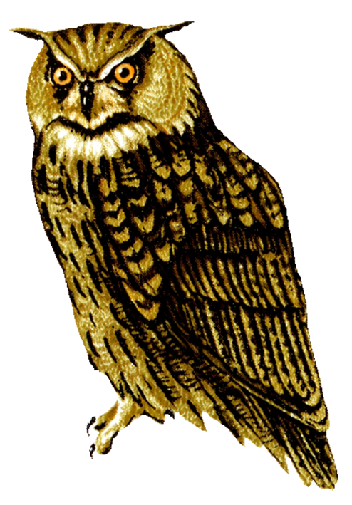 Great Horned Owl clipart Drawing owl clip owl facing