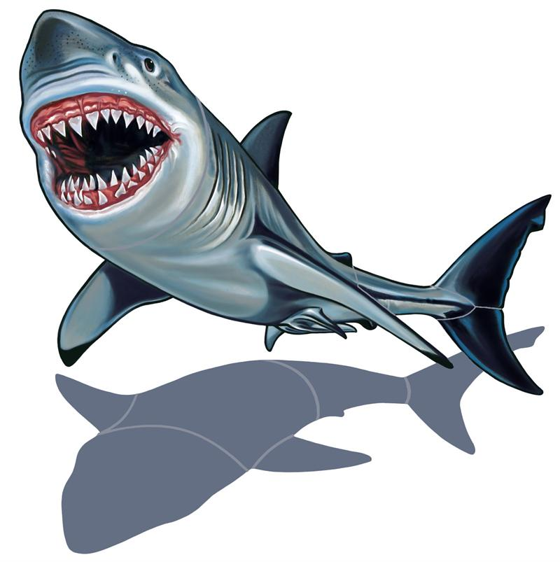 Bull Shark clipart open shark mouth Great great%20white%20shark%20clip%20art Panda White Art