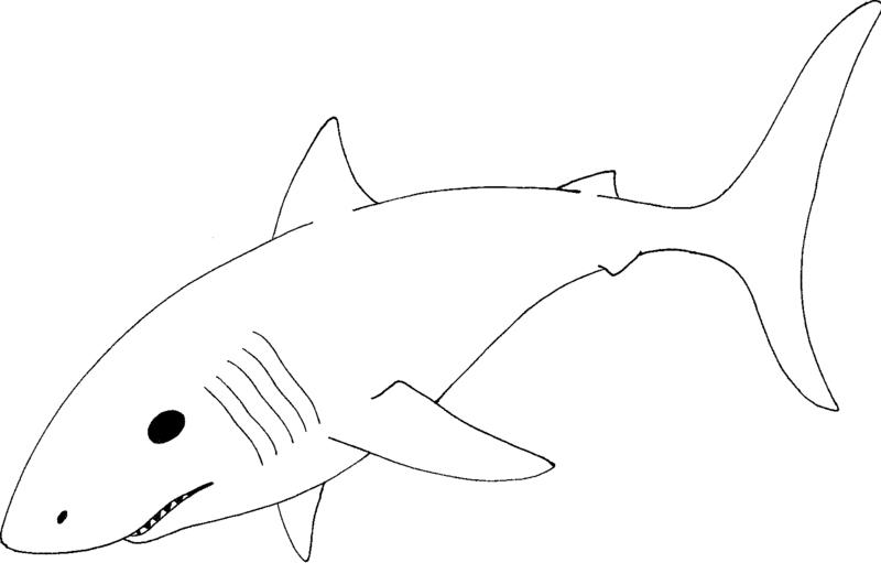 Shark clipart great white shark #8