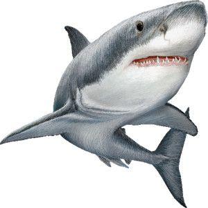 Drawn shark graffiti Ideas  #7479 Whale Clip