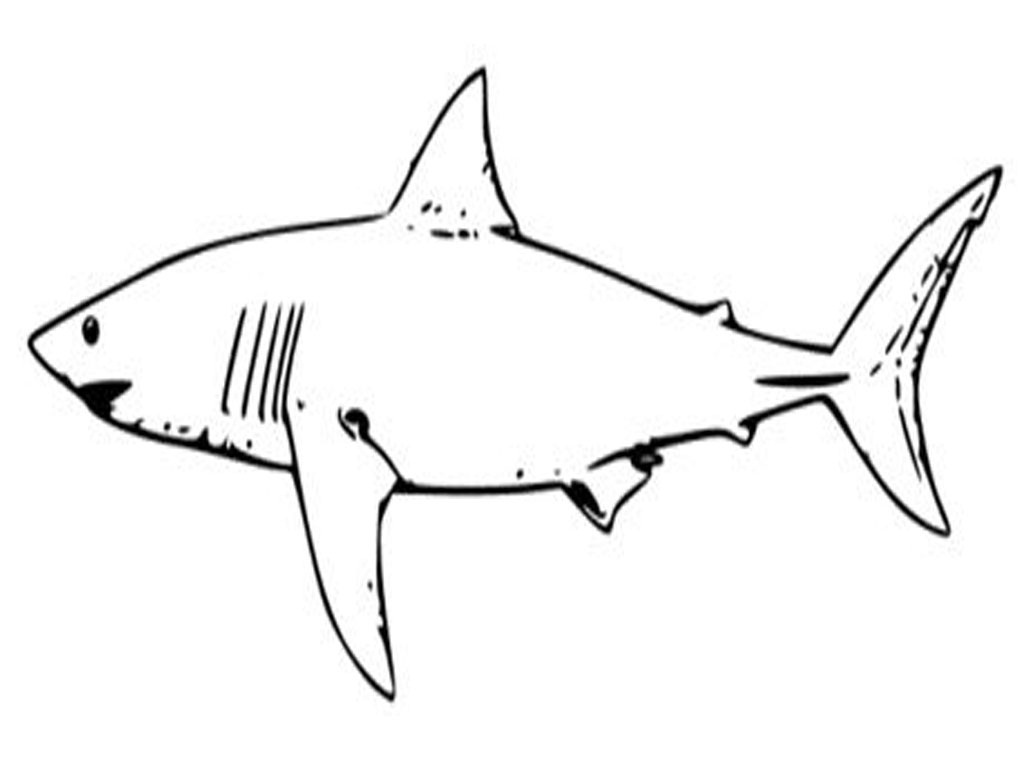 Tiger Shark clipart printable #1