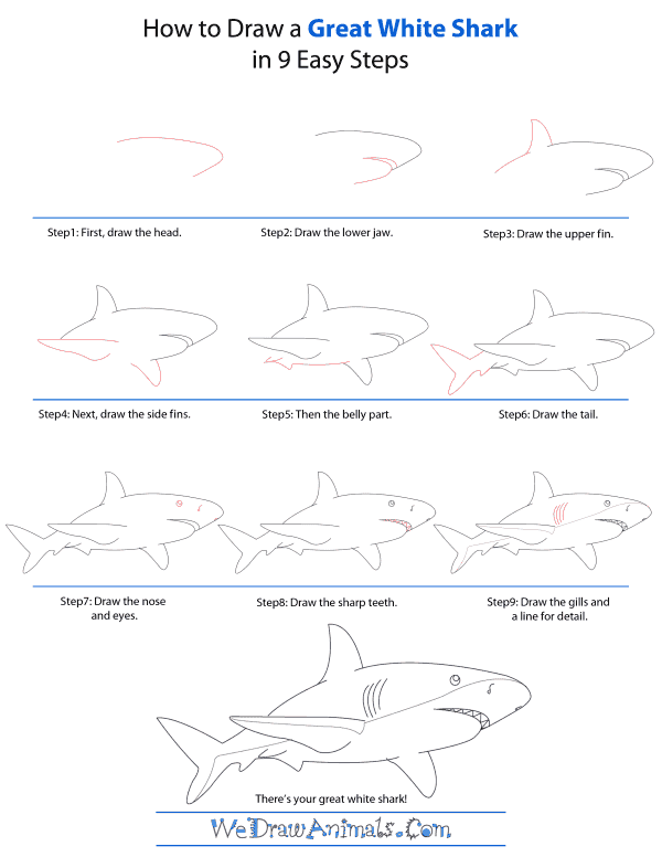 Drawn shark step by step Great Great White How Draw
