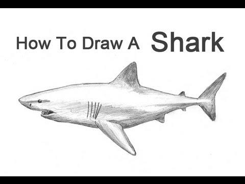 Drawn animal shark #4