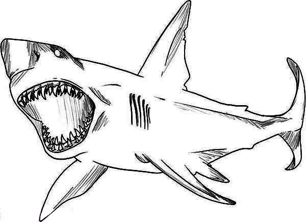 Bull Shark clipart sea animal Shark sheets White white Great