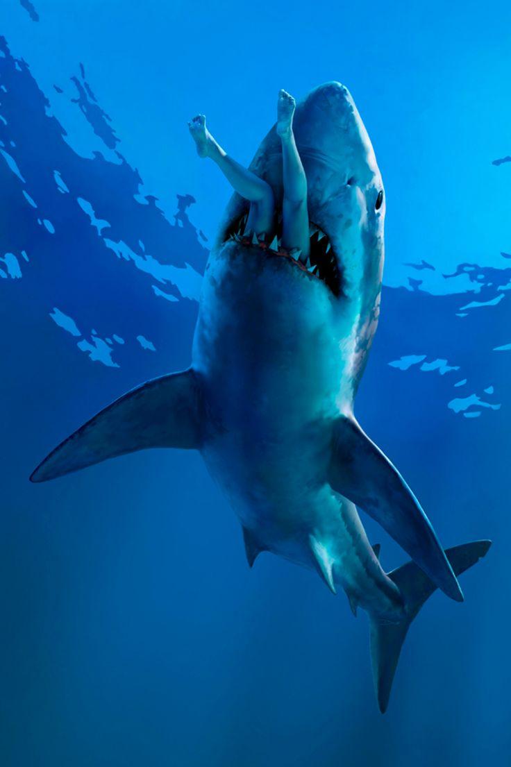 Drawn sea shark attack Pinterest 180 on Teeth best