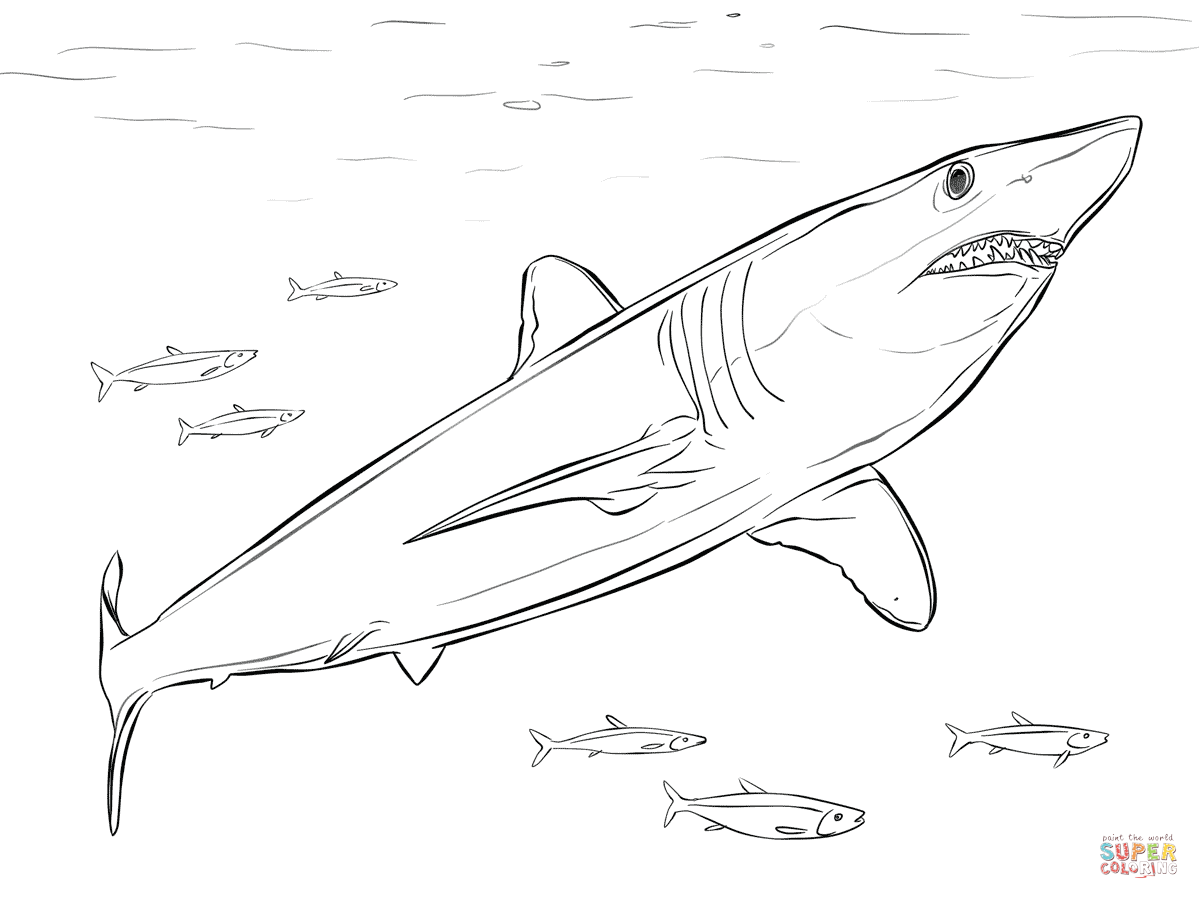Bull Shark clipart blue shark Mako Printable Coloring Pages Shark