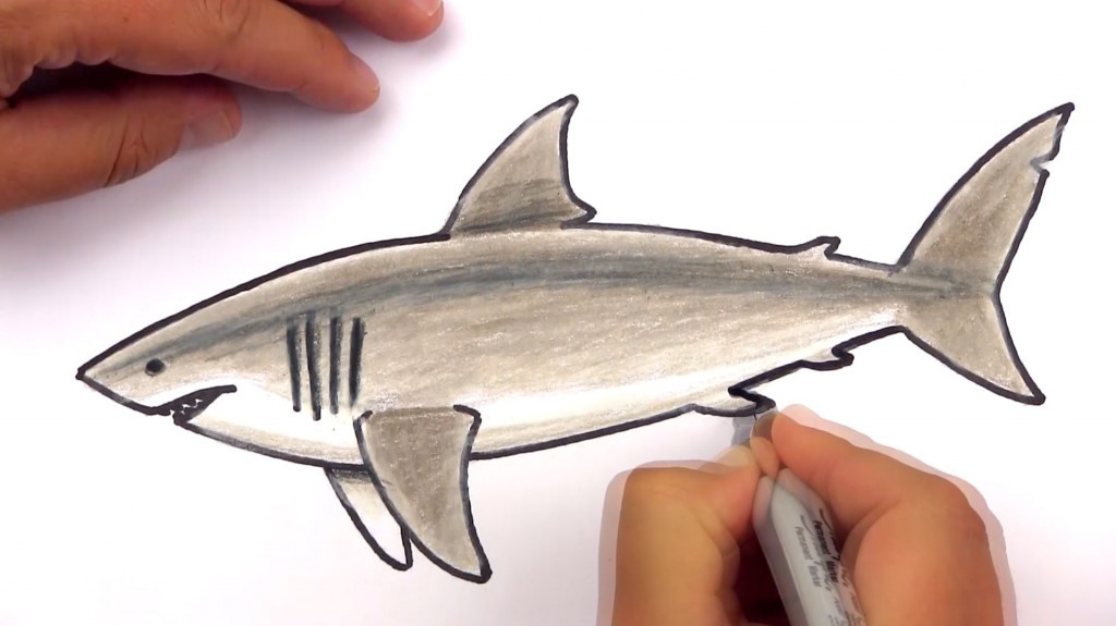 Drawn shark underwater Archives For Kids White Shark