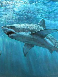 Drawn sea shark attack White Shark Seal Great Great