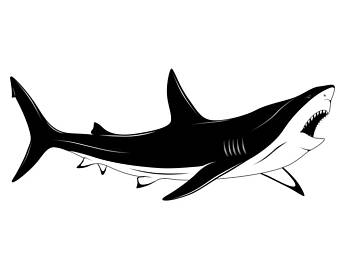 Bull Shark clipart jaws Shark Etsy svg Fish EPS