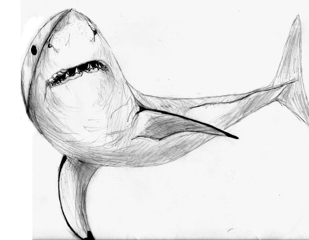 Drawn shark great white shark Great mats by more Great