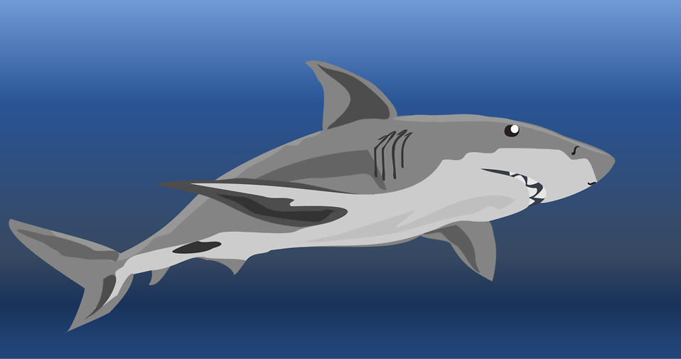 Bull Shark clipart blue shark Of a Free 16215 Shark