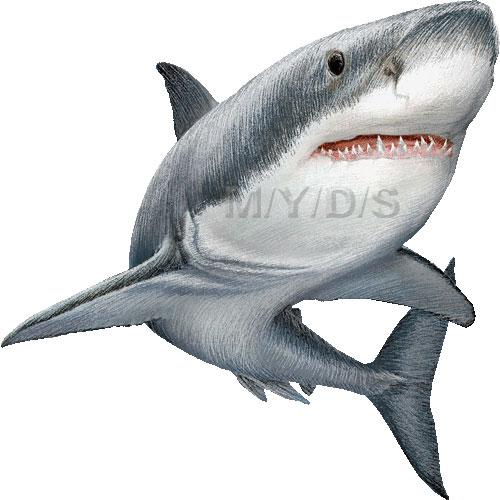 Shark clipart great white shark #9