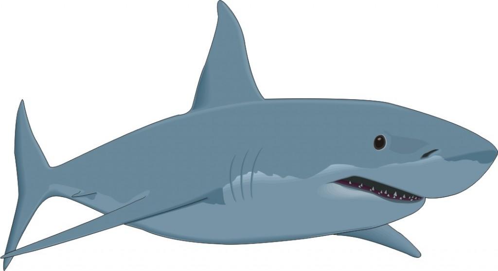 Shark clipart great white shark #5