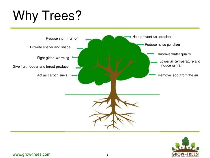 Green Day clipart afforestation On best life a org