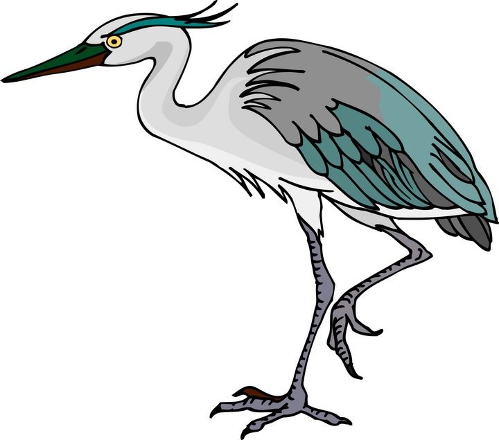 Blue Heron clipart shallow Free best 12 images on