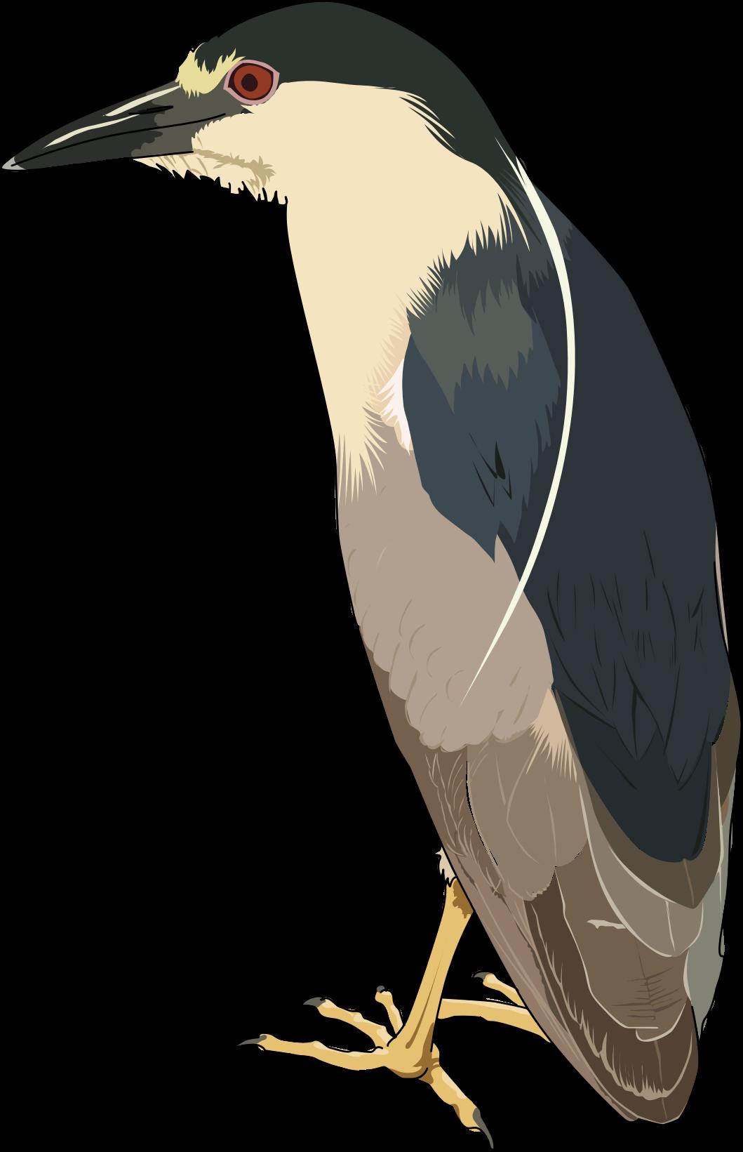 Green Heron clipart Drawings #2 Green Heron Download