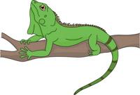 Iguana clipart Clipart Art iguana Illustrations Size: