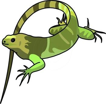 Green Iguana clipart Clip art and on Iguanas
