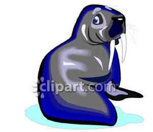 Grey clipart walrus Free Clipart Walrus Grey Royalty