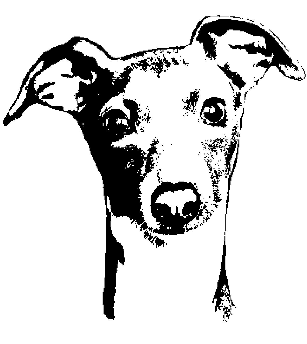 Greyhound clipart Clipart greyhound greyhound  Italian