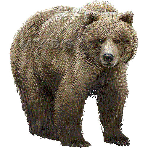 Grizzly Bear clipart growl Clip bear for clip Grizzly
