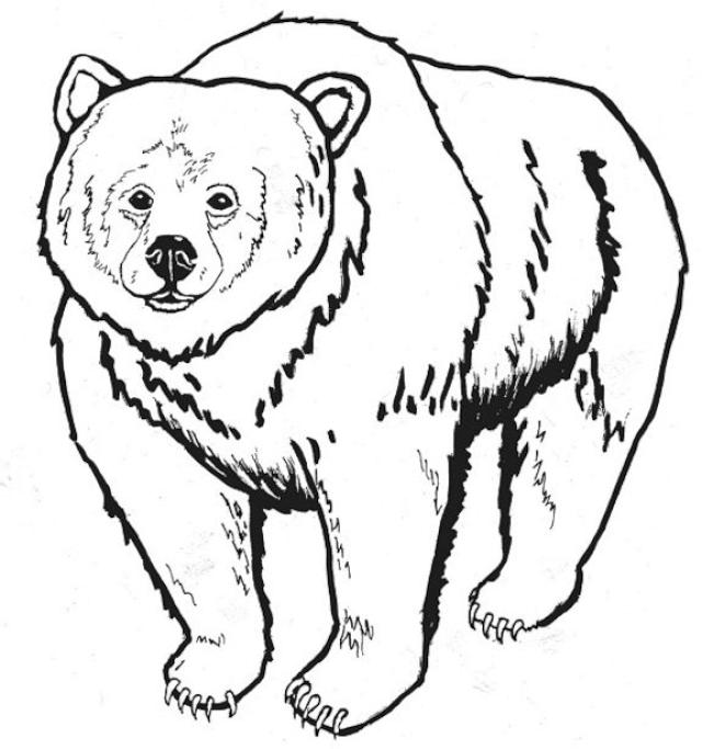Grizzly Bear clipart For pages grizzly coloring bear